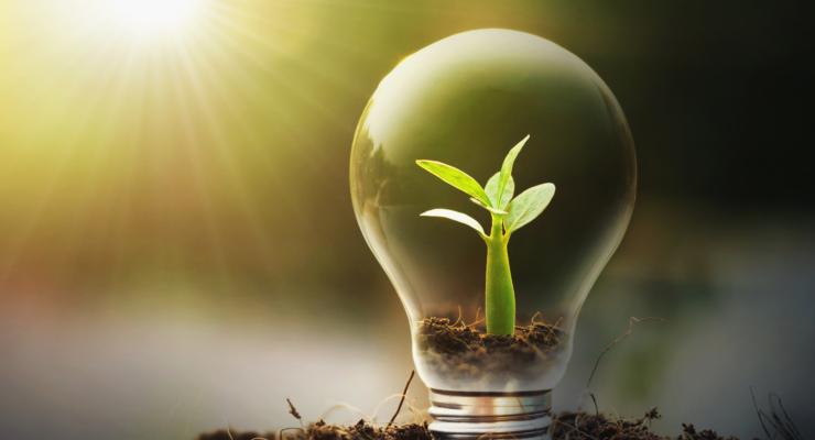 concept idea saving energy young plant light bulb
